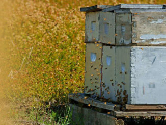 Beehives loaded on palette